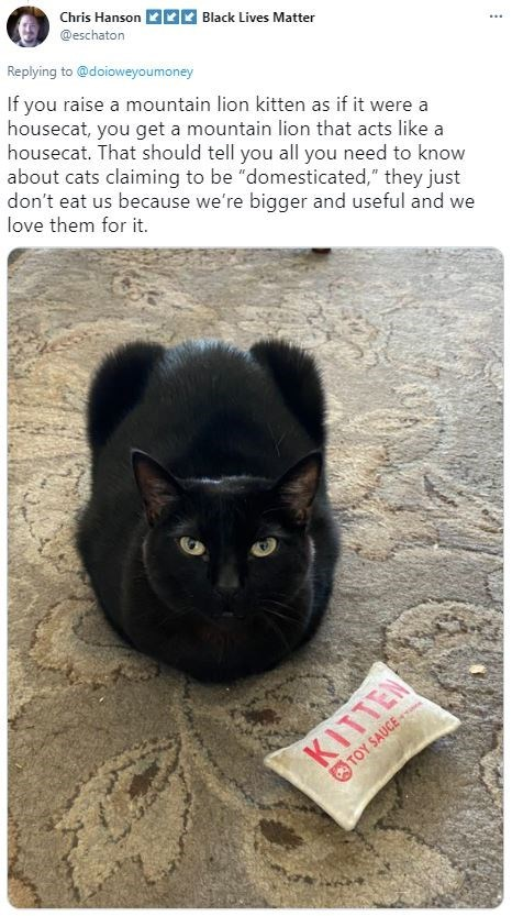 """Cat - Chris Hanson @eschaton 