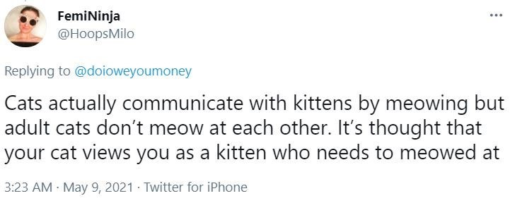 Rectangle - FemiNinja @HoopsMilo Replying to @doioweyoumoney Cats actually communicate with kittens by meowing but adult cats don't meow at each other. It's thought that your cat views you as a kitten who needs to meowed at 3:23 AM May 9, 2021 · Twitter for iPhone