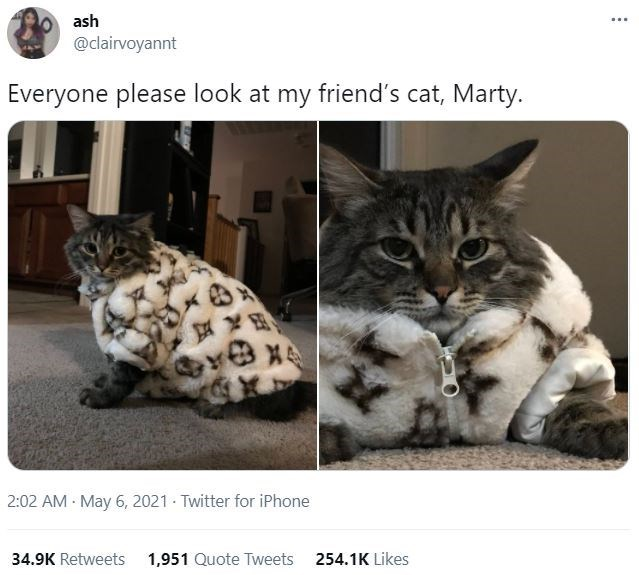 Cat - ash ... @clairvoyannt Everyone please look at my friend's cat, Marty. 2:02 AM May 6, 2021 Twitter for iPhone 34.9K Retweets 1,951 Quote Tweets 254.1K Likes