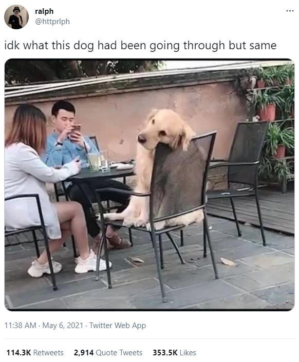 Table - ralph @httprlph ... idk what this dog had been going through but same 11:38 AM - May 6, 2021 - Twitter Web App 114.3K Retweets 2,914 Quote Tweets 353.5K Likes