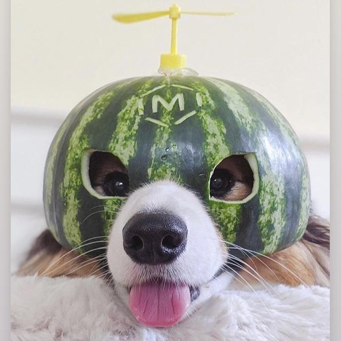Dog - MA