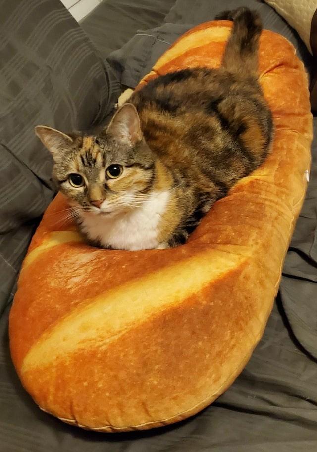 Cheezburger Image 9610283520