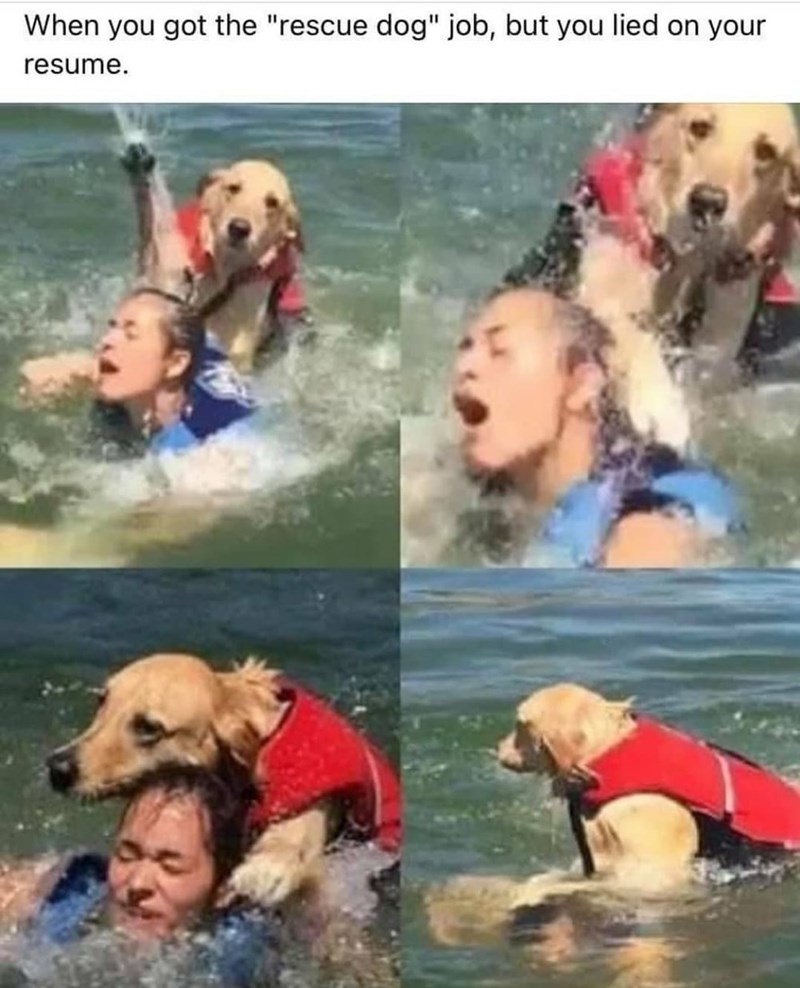 """Water - When you got the """"rescue dog"""" job, but you lied on your resume."""