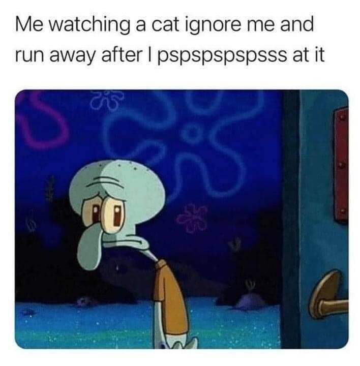Rectangle - Me watching a cat ignore me and run away after I pspspspspsss at it