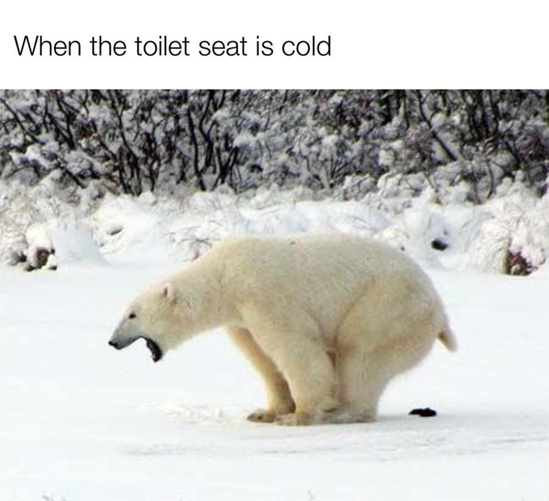 Polar bear - When the toilet seat is cold
