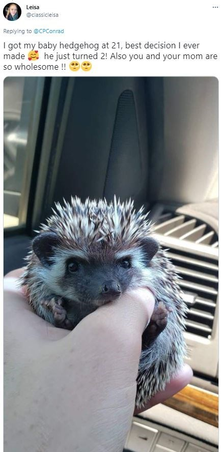Hedgehog - Leisa ... @classicleisa Replying to @CPConrad I got my baby hedgehog at 21, best decision I ever made a he just turned 2! Also you and your mom are so wholesome !!