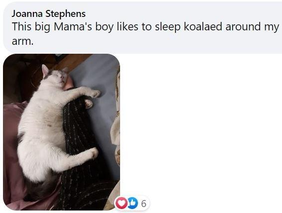 Cat - Joanna Stephens This big Mama's boy likes to sleep koalaed around my arm. OD 6