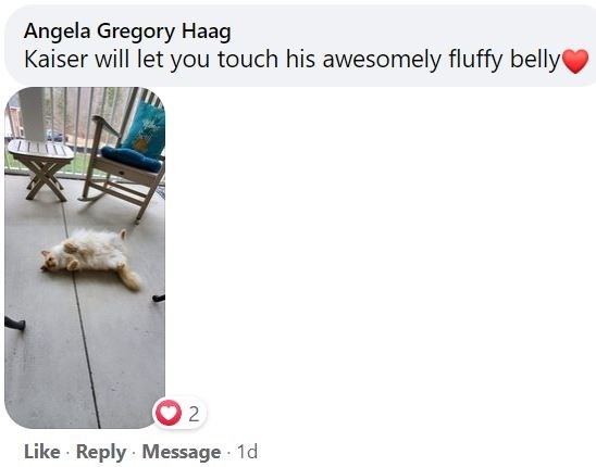 Wood - Angela Gregory Haag Kaiser will let you touch his awesomely fluffy belly 2 Like Reply · Message 1d