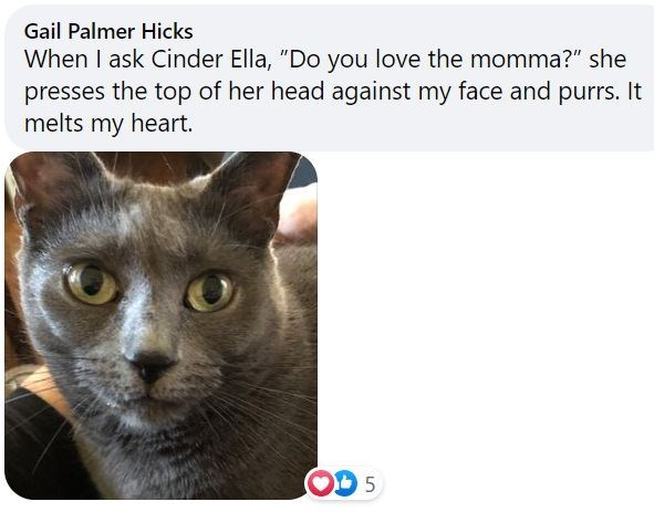 """Cat - Gail Palmer Hicks When I ask Cinder Ella, """"Do you love the momma?"""" she presses the top of her head against my face and purrs. It melts my heart."""