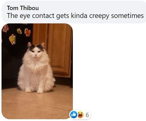 Brown - Tom Thibou The eye contact gets kinda creepy sometimes 6.