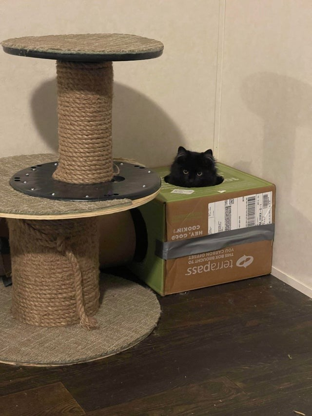 Cat - terrapass THIS BOX BROUCHT TO YOU CARBON OFFSET COOKIN' do0D 'ABH
