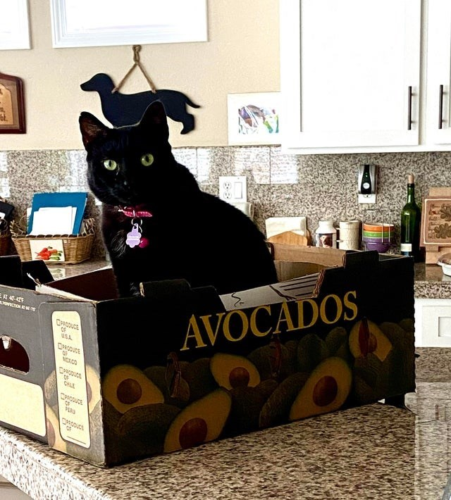 Cat - AVOCADOS A7ORICTION R W OF USA OF MERCO OF CHLE VER