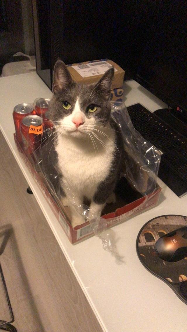 Cat - BETA