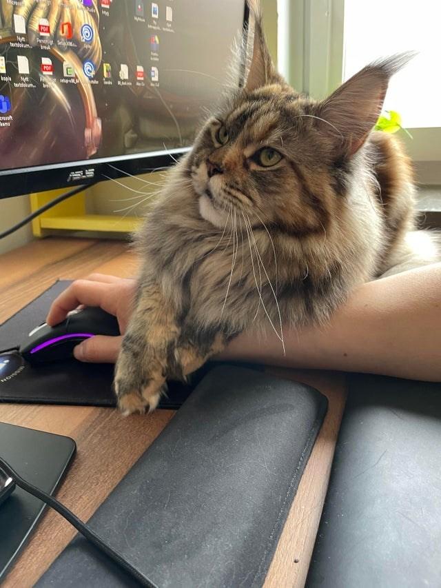 Cat - Por Pe In bwdokum. POr lopla Ny tuhtekum. PIN he M 所