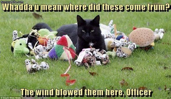 cat memes - 9610501120