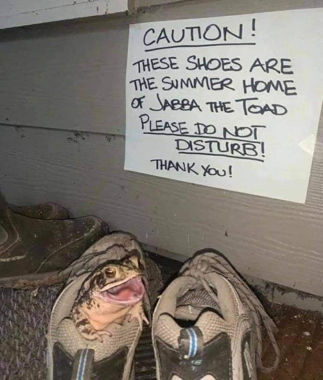 Handwriting - CAUTION! THESE SHOES ARE THE SUMMER HOME of JABBA THE TOAD PLEASE DO NOT DISTURB! THANK YOu!