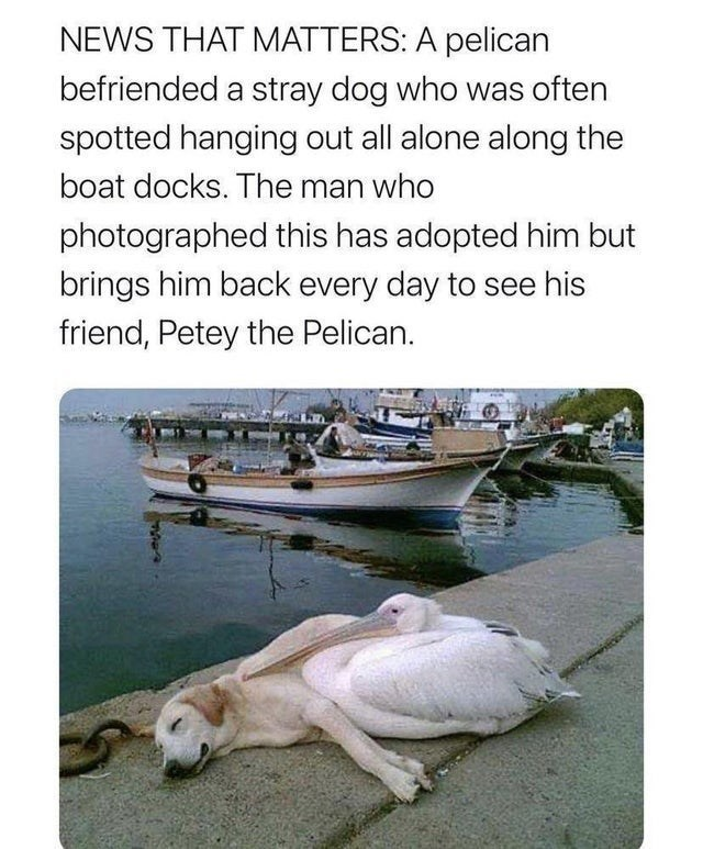 Water - NEWS THAT MATTERS: A pelican befriended a stray dog who was often spotted hanging out all alone along the boat docks. The man who photographed this has adopted him but brings him back every day to see his friend, Petey the Pelican.