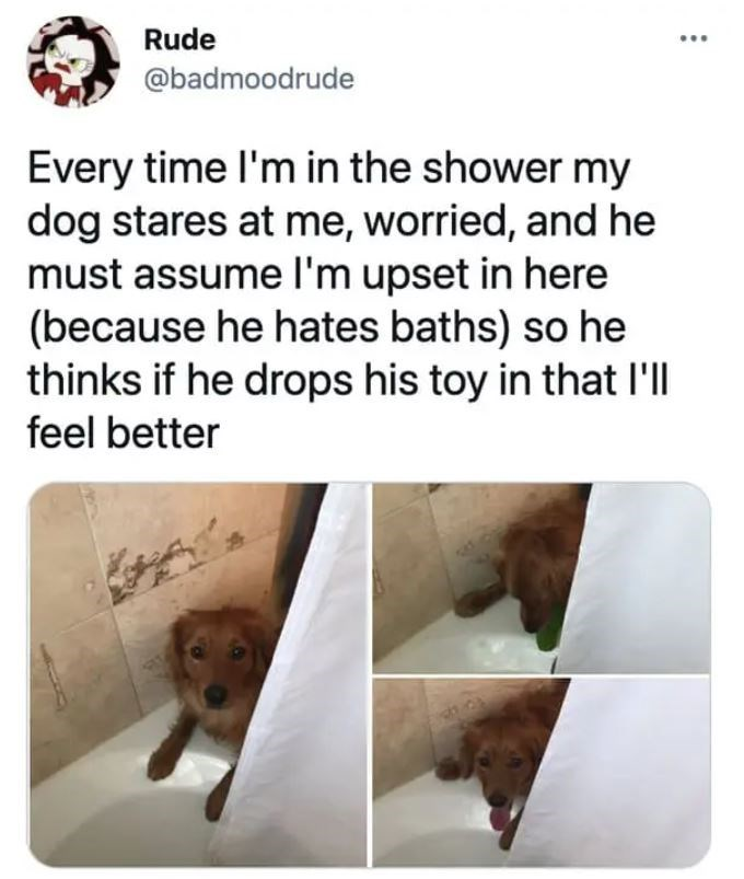 Vertebrate - Rude @badmoodrude Every time l'm in the shower my dog stares at me, worried, and he must assume l'm upset in here (because he hates baths) so he thinks if he drops his toy in that l'll feel better