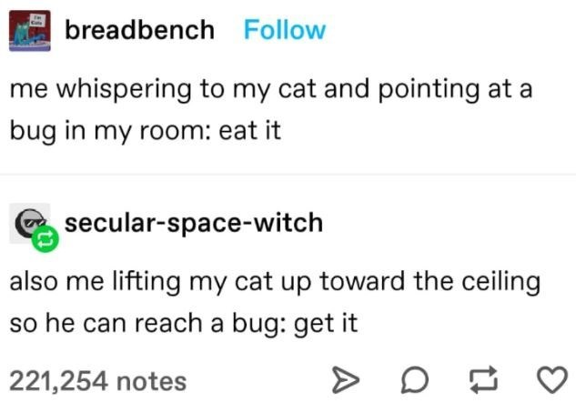 Font - breadbench Follow me whispering to my cat and pointing at a bug in my room: eat it secular-space-witch also me lifting my cat up toward the ceiling so he can reach a bug: get it 221,254 notes