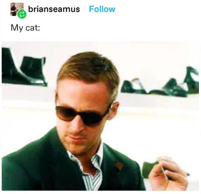 Glasses - brianseamus Follow My cat: