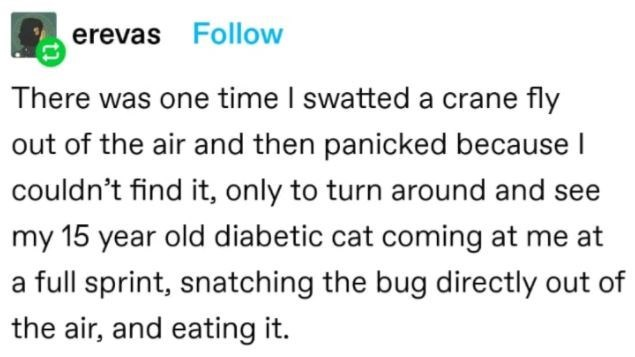 Rectangle - erevas Follow There was one time I swatted a crane fly out of the air and then panicked because l couldn't find it, only to turn around and see my 15 year old diabetic cat coming at me at a full sprint, snatching the bug directly out of the air, and eating it.