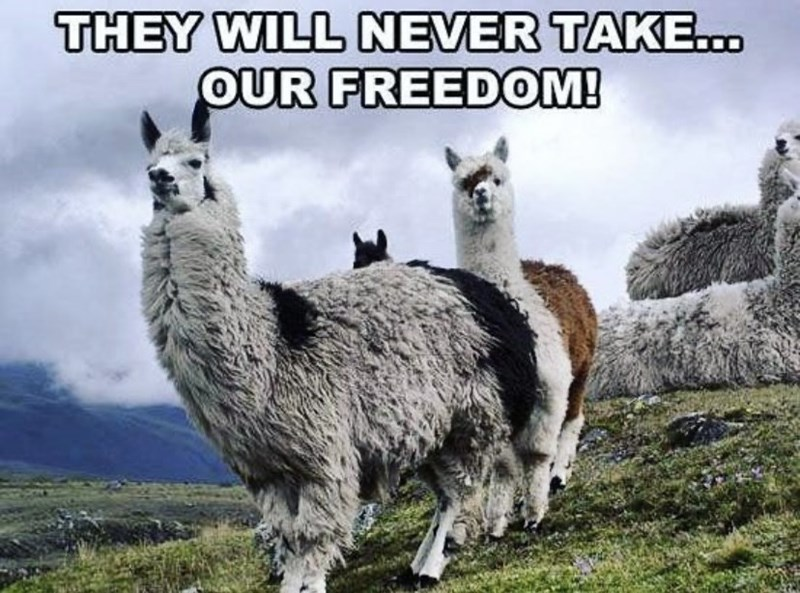 Ecoregion - THEY WILL NEVER TAKE.. OUR FREEDOM!