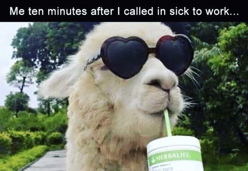 Sunglasses - Me ten minutes after I called in sick to work... UHERBALIFE