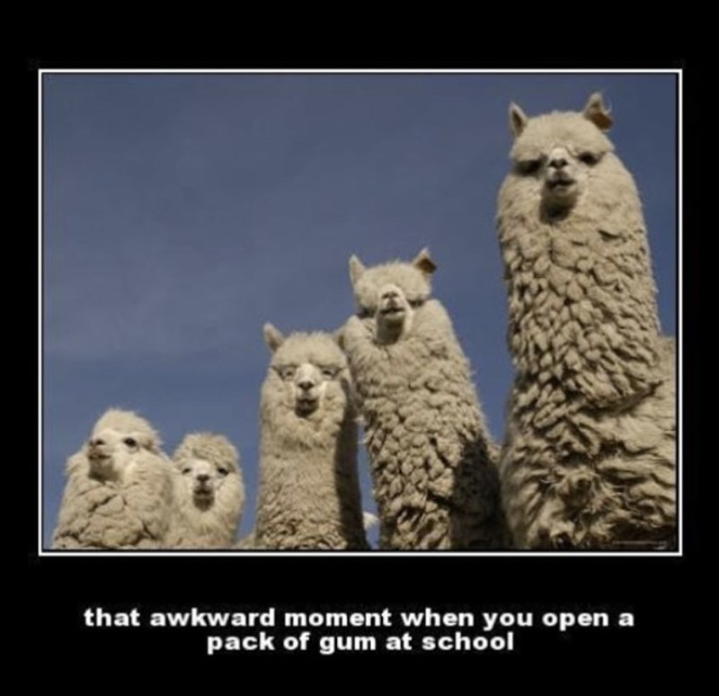 Photograph - that awkward moment when you open a pack of gum at school