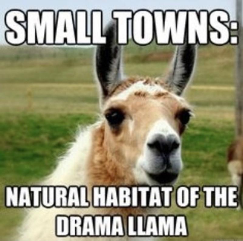 Ecoregion - SMALL TOWNS: NATURAL HABITAT OF THE DRAMA LLAMA