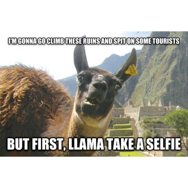 Llama - IM GONNA GO CLIMB THESE RUINS AND SPITON SOME TOURISTS BUT FIRST, LLAMA TAKE A SELFIE