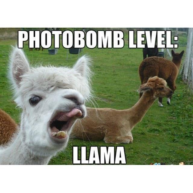 Green - PHOTOBOMB LEVEL: LLAMA