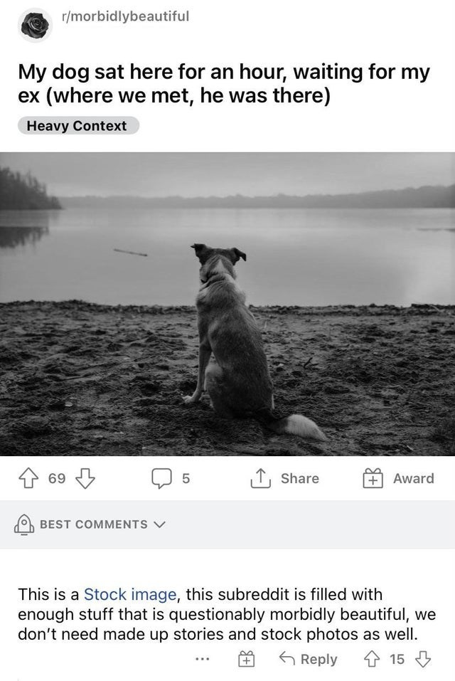 Water - r/morbidlybeautiful My dog sat here for an hour, waiting for my ex (where we met, he was there) Heavy Context 1 69 T, Share Award BEST COMMENTS V This is a Stock image, this subreddit is filled with enough stuff that is questionably morbidly beautiful, we don't need made up stories and stock photos as well. 金 15 G Reply LO