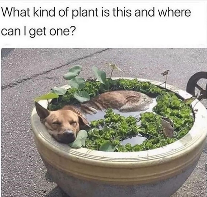 Dog - What kind of plant is this and where can I get one?