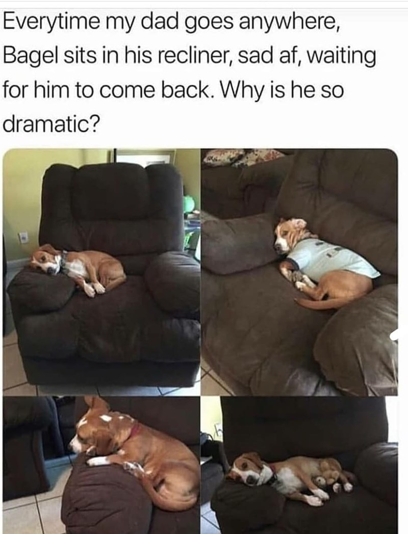 Photograph - Everytime my dad goes anywhere, Bagel sits in his recliner, sad af, waiting for him to come back. Why is he so dramatic?