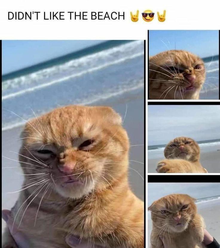 Cat - DIDN'T LIKE THE BEACH