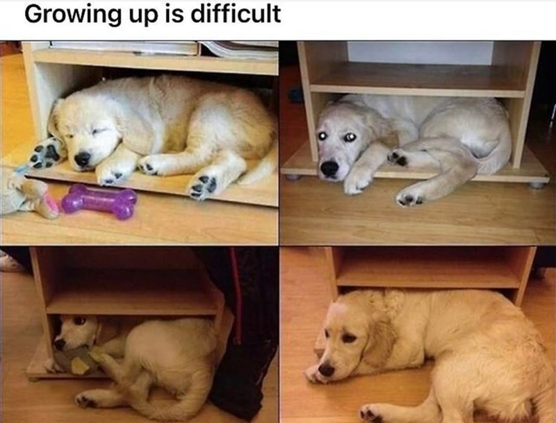 Dog - Growing up is difficult