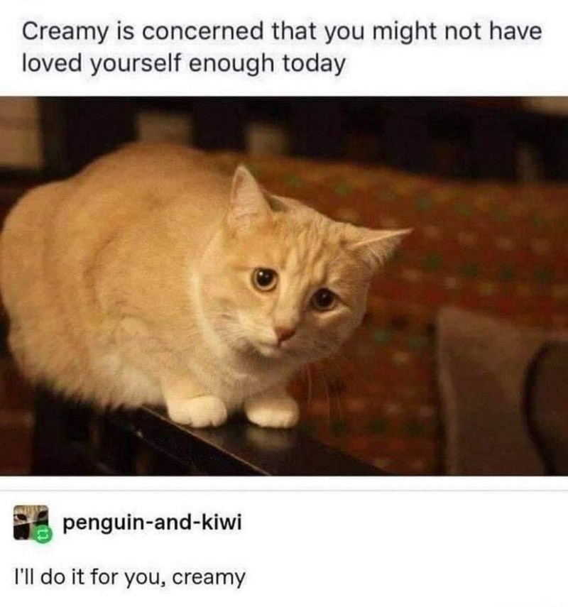 Cat - Creamy is concerned that you might not have loved yourself enough today penguin-and-kiwi I'll do it for you, creamy