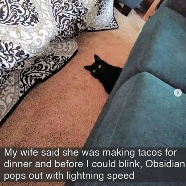 Cat - My wife said she was making tacos for dinner and before I could blink, Obsidian pops out with lightning speed