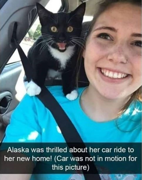 Smile - Alaska was thrilled about her car ride to her new home! (Car was not in motion for this picture)