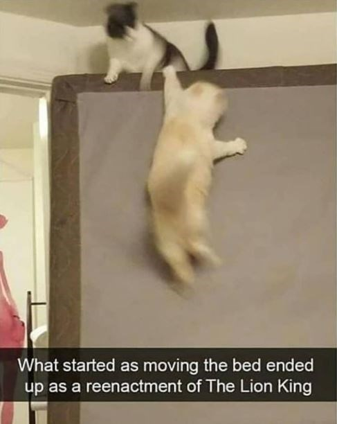 Photograph - What started as moving the bed ended up as a reenactment of The Lion King