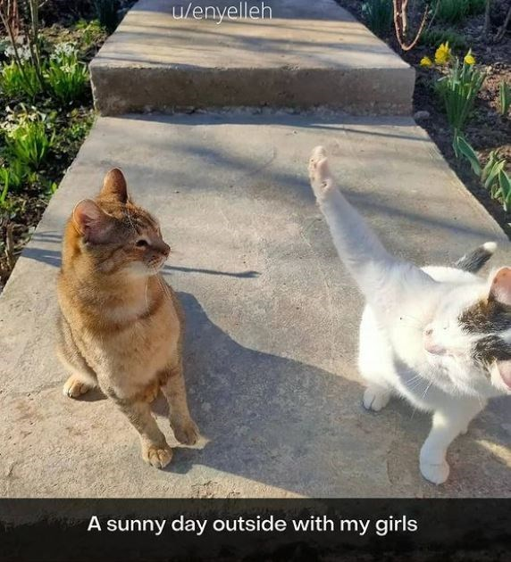 Cat - u/enyelleh A sunny day outside with my girls