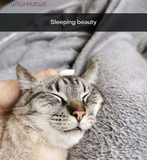 Cat - u/Kurelutsuti Sleeping beauty