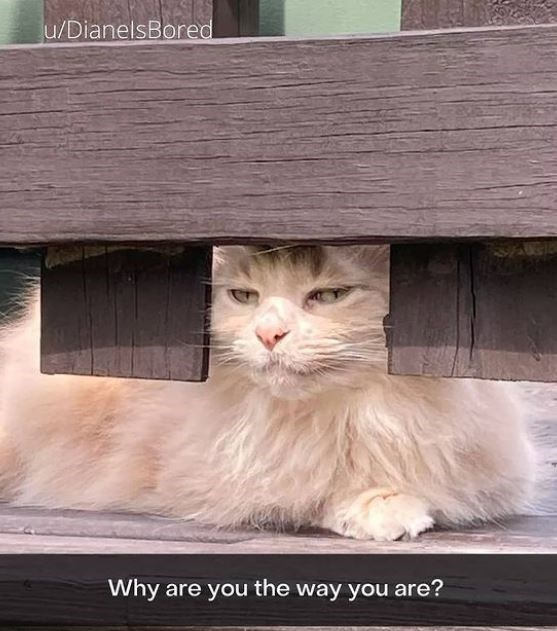 Cat - u/DianelsBored Why are you the way you are?