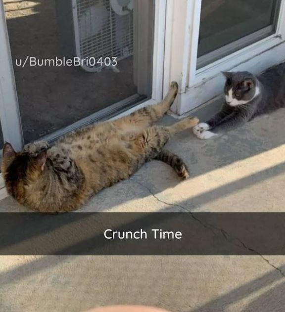 Vertebrate - DOSYAS RE u/BumbleBri0403 Crunch Time