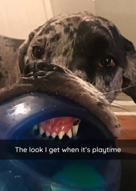 Dog - The look I get when it's playtime