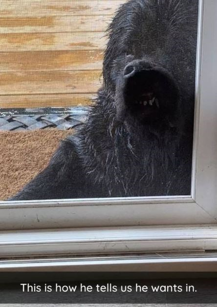 Carnivore - This is how he tells us he wants in.