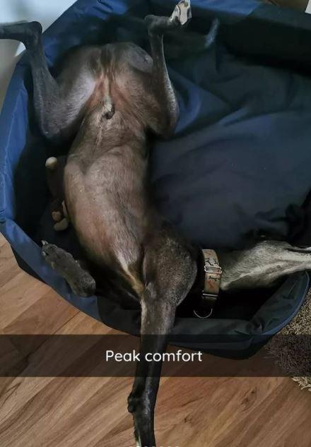 Dog breed - Peak comfort