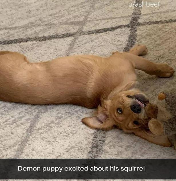 Dog - u/ashbeef Demon puppy excited about his squirrel