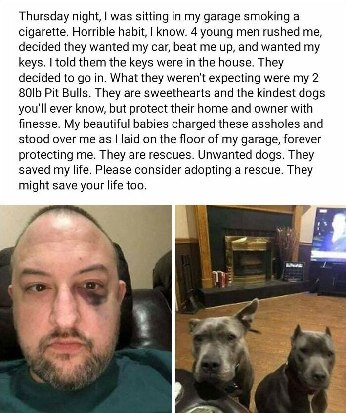 Dog - Thursday night, I was sitting in my garage smoking a cigarette. Horrible habit, I know. 4 young men rushed me, decided they wanted my car, beat me up, and wanted my keys. I told them the keys were in the house. They decided to go in. What they weren't expecting were my 2 80lb Pit Bulls. They are sweethearts and the kindest dogs you'll ever know, but protect their home and owner with finesse. My beautiful babies charged these assholes and stood over mne as I laid on the floor of my garage,