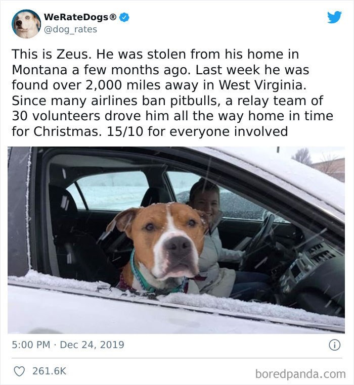 Dog - WeRateDogs® @dog_rates This is Zeus. He was stolen from his home in Montana a few months ago. Last week he was found over 2,000 miles away in West Virginia. Since many airlines ban pitbulls, a relay team of 30 volunteers drove him all the way home in time for Christmas. 15/10 for everyone involved 5:00 PM · Dec 24, 2019 261.6K boredpanda.com